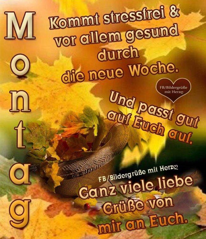 An den Beitrag angehängtes Bild: http://img1.dreamies.de/img/153/b/0zee0knk12g.jpg