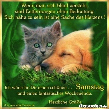 Katzengrüße Zum Jeweiligen Wochentag Minimausers Webseite