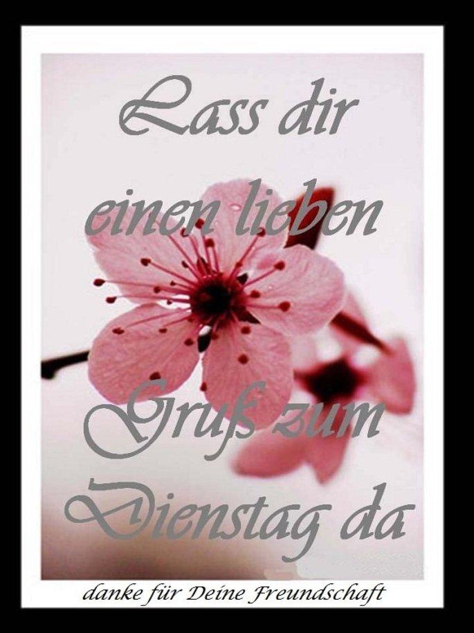 An den Beitrag angehängtes Bild: http://img1.dreamies.de/img/52/b/26ccr0ym2jx.jpg