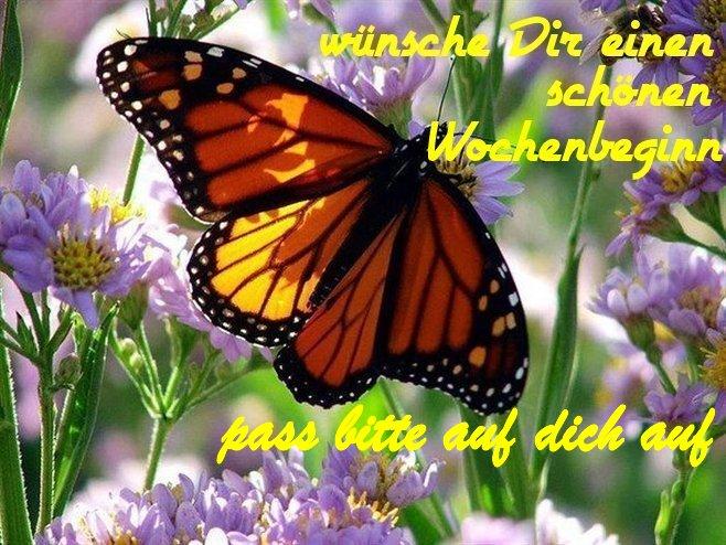 An den Beitrag angehängtes Bild: http://img1.dreamies.de/img/549/b/n9r7gzegk2c.jpg