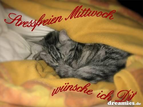 http://img1.dreamies.de/img/743/b/kjcok1c2kop.jpg