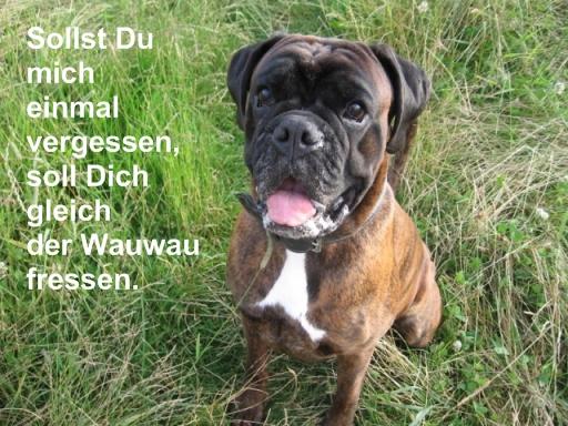 An den Beitrag angehängtes Bild: http://img1.dreamies.de/img/785/b/7nt570hjuej.jpg